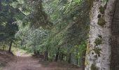 Randonnée Marche MUHLBACH-SUR-BRUCHE - Le Jardin des Fées par la cascade de Soulzbach - Photo 31