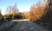 Trail Walk SAINT-JEAN-AUX-BOIS - en forêt de Compiègne_33_12_2019_les Tournantes de l'étang Saint-Jean et des Prés Saint-Jean - Photo 29