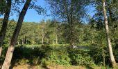 Randonnée Marche Saint-Hubert - Mirwart redu  - Photo 18