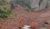 Trail Horseback riding AUBURE - 2019-11-03 WE Aubure Taennchel - Photo 1