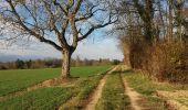 Trail Other activity RIXHEIM - promenade champêtre - Photo 1