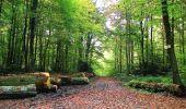 Randonnée A pied VILLERS-COTTERETS - le GR11A  dans la Forêt de Retz  - Photo 154
