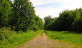 Randonnée Marche COYOLLES - en forêt de Retz_78_les rayons du Rond Capitaine - Photo 34