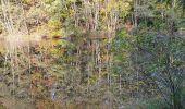 Trail Walk ECROMAGNY - Les 1000 étangs à Ecromagny - Photo 8