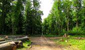 Randonnée Marche COYOLLES - en forêt de Retz_78_les rayons du Rond Capitaine - Photo 55