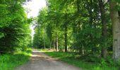 Trail Walk COYOLLES - en forêt de Retz_78_les rayons du Rond Capitaine - Photo 48