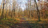 Trail Walk SAINT-JEAN-AUX-BOIS - en forêt de Compiègne_33_12_2019_les Tournantes de l'étang Saint-Jean et des Prés Saint-Jean - Photo 51