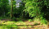 Randonnée Marche COYOLLES - en forêt de Retz_78_les rayons du Rond Capitaine - Photo 99