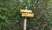 Trail Walk MONTHELIE - De Monthelie à Pommard - Photo 10
