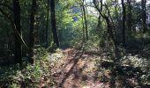 Randonnée Trail NEANT-SUR-YVEL - Autour des étangs à partir du gîte de tante Phonsine - Photo 13