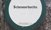 Randonnée Marche MUHLBACH-SUR-BRUCHE - Le Jardin des Fées par la cascade de Soulzbach - Photo 34