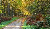 Randonnée Marche SAINT-JEAN-AUX-BOIS - en forêt de Compiègne_19_le Puits d'Antin_les Mares St-Louis_La Muette - Photo 68