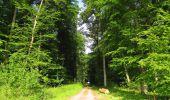 Randonnée Marche COYOLLES - en forêt de Retz_78_les rayons du Rond Capitaine - Photo 93