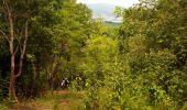 Trail Walk RIVIERE-SALEE - JOUBADIÈRE - MORNE CONSTANT - PAGERIE - Photo 16