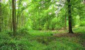 Randonnée A pied VILLERS-COTTERETS - le GR11A  dans la Forêt de Retz  - Photo 92
