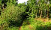Randonnée Marche COYOLLES - en forêt de Retz_78_les rayons du Rond Capitaine - Photo 124