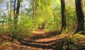 Randonnée A pied VILLERS-COTTERETS - le GR11A  dans la Forêt de Retz  - Photo 133
