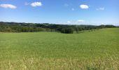 Randonnée Marche Havelange - Bois, Rivière et champs - Photo 9