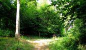 Randonnée Marche SAINT-JEAN-AUX-BOIS - en forêt de Compiègne_6_les Grands Monts_la route tournante sur la tête St-Jean - Photo 135