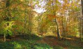 Randonnée Marche SAINT-JEAN-AUX-BOIS - en forêt de Compiègne_32_11_2019_les Tournantes de la Muette et sous la Tête Saint-Jean - Photo 116