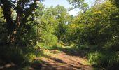 Randonnée Marche LACROIX-SAINT-OUEN - en forêt de Compiègne_35_la Croix Saint-Sauveur_le Ru du Goderu - Photo 5