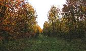 Randonnée Marche SAINT-JEAN-AUX-BOIS - en forêt de Compiègne_32_11_2019_les Tournantes de la Muette et sous la Tête Saint-Jean - Photo 131