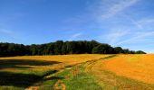 Randonnée Marche HARAMONT - en forêt de Retz_79_08_2019_vers Taillefontaine et Retheuil par les lisières - Photo 30