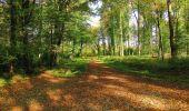 Randonnée A pied VILLERS-COTTERETS - le GR11A  dans la Forêt de Retz  - Photo 147