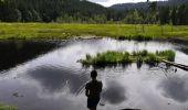 Trail Walk LA BRESSE - Lac de Lispach - Photo 7
