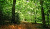 Randonnée Marche COYOLLES - en forêt de Retz_78_les rayons du Rond Capitaine - Photo 144