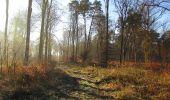Trail Walk SAINT-JEAN-AUX-BOIS - en forêt de Compiègne_33_12_2019_les Tournantes de l'étang Saint-Jean et des Prés Saint-Jean - Photo 177