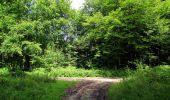 Randonnée Marche HARAMONT - en forêt de Retz_79_08_2019_vers Taillefontaine et Retheuil par les lisières - Photo 79
