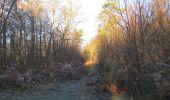 Trail Walk SAINT-JEAN-AUX-BOIS - en forêt de Compiègne_33_12_2019_les Tournantes de l'étang Saint-Jean et des Prés Saint-Jean - Photo 131