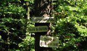 Trail Walk DAMPLEUX - en forêt de Retz_80_sur la Route Tortue et la Route Droite - Photo 261