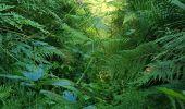 Randonnée Marche LOCMELAR - ballade 270719 - Photo 40