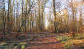 Trail Walk SAINT-JEAN-AUX-BOIS - en forêt de Compiègne_33_12_2019_les Tournantes de l'étang Saint-Jean et des Prés Saint-Jean - Photo 74
