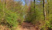 Randonnée Marche LONGPONT - en forêt de Retz_77_Longpont_Puiseux en Retz_AR - Photo 14