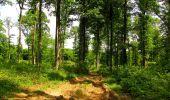 Randonnée Marche COYOLLES - en forêt de Retz_78_les rayons du Rond Capitaine - Photo 18