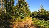 Trail Walk DAMPLEUX - en forêt de Retz_80_sur la Route Tortue et la Route Droite - Photo 102