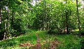 Randonnée Marche SAINT-JEAN-AUX-BOIS - en forêt de Compiègne_6_les Grands Monts_la route tournante sur la tête St-Jean - Photo 181