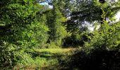 Trail Walk DAMPLEUX - en forêt de Retz_80_sur la Route Tortue et la Route Droite - Photo 115