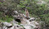 Trail Walk CEILLAC - lac Sainte Anne lac miroir - Photo 6