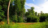 Randonnée Marche COYOLLES - en forêt de Retz_78_les rayons du Rond Capitaine - Photo 88