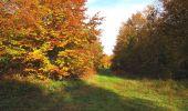 Randonnée Marche SAINT-JEAN-AUX-BOIS - en forêt de Compiègne_32_11_2019_les Tournantes de la Muette et sous la Tête Saint-Jean - Photo 136
