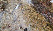 Trail Walk Sainte-Ode - rando lavacherie 29/12/2020 - Photo 2