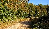 Trail Walk DAMPLEUX - en forêt de Retz_80_sur la Route Tortue et la Route Droite - Photo 75