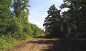 Randonnée Marche LACROIX-SAINT-OUEN - en forêt de Compiègne_35_la Croix Saint-Sauveur_le Ru du Goderu - Photo 98