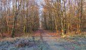 Trail Walk SAINT-JEAN-AUX-BOIS - en forêt de Compiègne_33_12_2019_les Tournantes de l'étang Saint-Jean et des Prés Saint-Jean - Photo 94