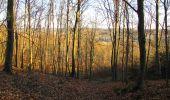 Trail Walk PIERREFONDS - en forêt de Compiègne_24_Tournantes sur le Voliard et sur la Fortelle_chaussée Brunehaut - Photo 98