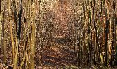 Trail Walk PIERREFONDS - en forêt de Compiègne_24_Tournantes sur le Voliard et sur la Fortelle_chaussée Brunehaut - Photo 63